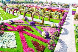 Dubai Miracle Garden парк квітів