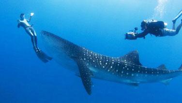 Мальдіви на дайвінг
