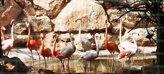 Тварин і птахів парк Пафос