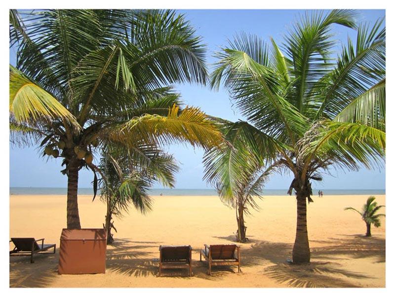 Екзотичний відпочинок! Гарячий тур на Шрі-Ланку!