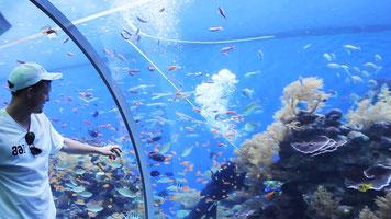 Обсерваторія підводна