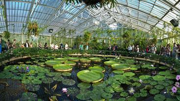 Ботанічний сад празький