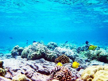 Коралові на Мальдівах рифи густі