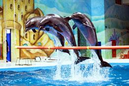 Дубаї дельфінарій всередині