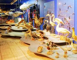 Флора музей моря виставка флора
