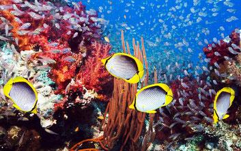 Коралові рифи і Червоне море